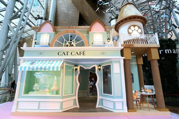 cat cafwe